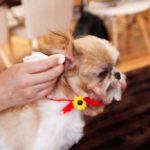 2320犬の耳掃除のやりかた・ケア方法を詳しくご紹介