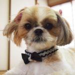 2113愛犬におしゃれな首輪を手作りしましょう!