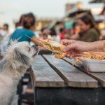 2362犬はエビを食べても良い?エビの栄養や犬にもたらす効果を解説