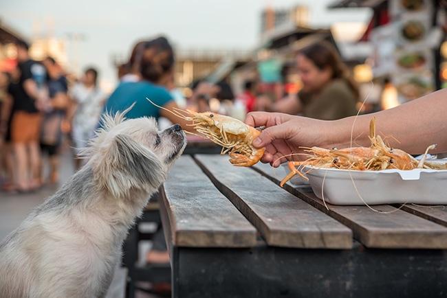 犬はエビを食べても良い?エビの栄養や犬にもたらす効果を解説