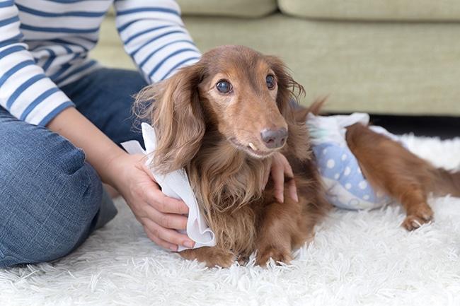 老犬の食事は?適切な食事量やレシピ、食べない場合の対処法等をご紹介
