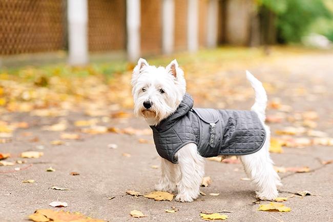 愛犬のレインコートの選び方をご紹介!雨の日のお散歩も楽しく