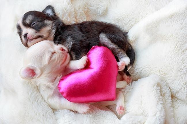 小型犬の出産について飼い主様が知っておきたいこと