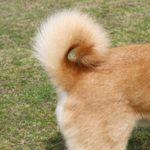 2569犬が自分のしっぽを追いかける理由って何んだろう?