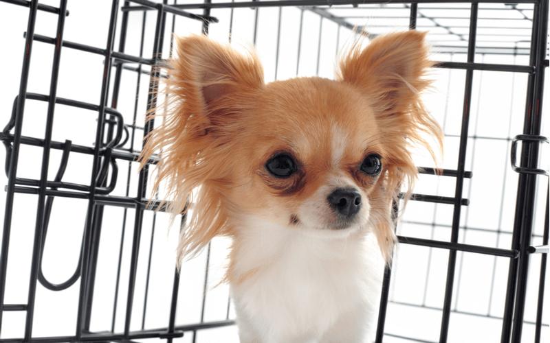 小型犬のケージはどんなものを選べばよい?おすすめケージ5選をご紹介