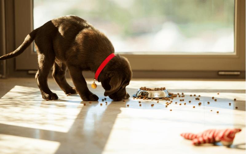 ドッグフードの保存で愛犬の健康を守ろう!知っておくべきドッグフード基本知識と保存方法