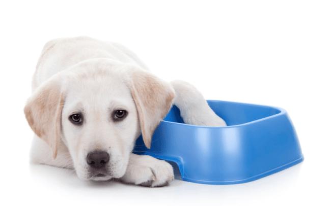 犬にブロッコリーをあげても大丈夫?ブロッコリーを与える時の注意点とメリット
