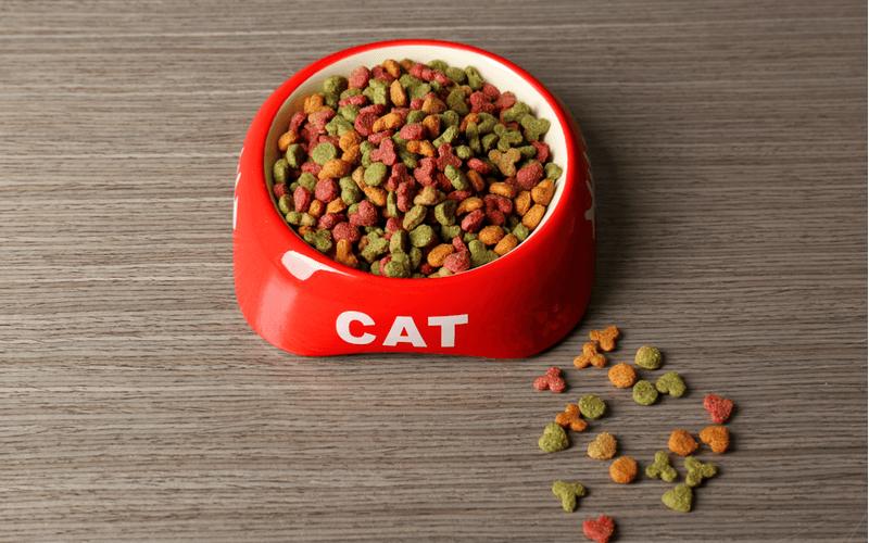 犬がキャットフードを食べても大丈夫?犬と猫と飼っている飼い主さんが知っておくべきフードの違い