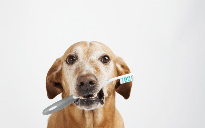 犬の早食いは防止した方がいい?早食いしてはいけない理由と簡単にできる対策方法