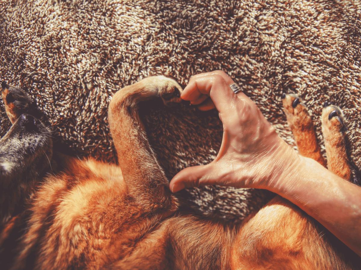 ドッグフードの成分表の見方!本当に愛犬の健康に良いフードかを見分ける3つのポイントとは