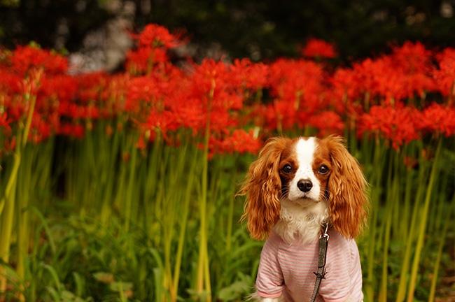 愛犬と一緒に墓参りに行くときのマナー