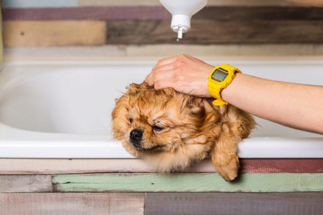 犬のくしゃみが止まらない! 考えられる原因や病気は?