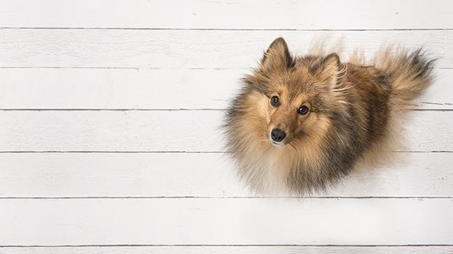 犬とアイスを一緒に楽しみたいけど、いいのかな?