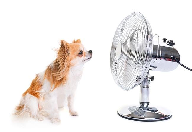 犬も夏バテをするの?症状と対処法をご紹介
