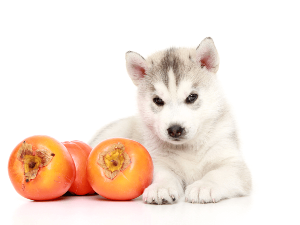 犬は柿を食べていいの?あげるときは皮や種を取り除いて誤食しないように注意しよう