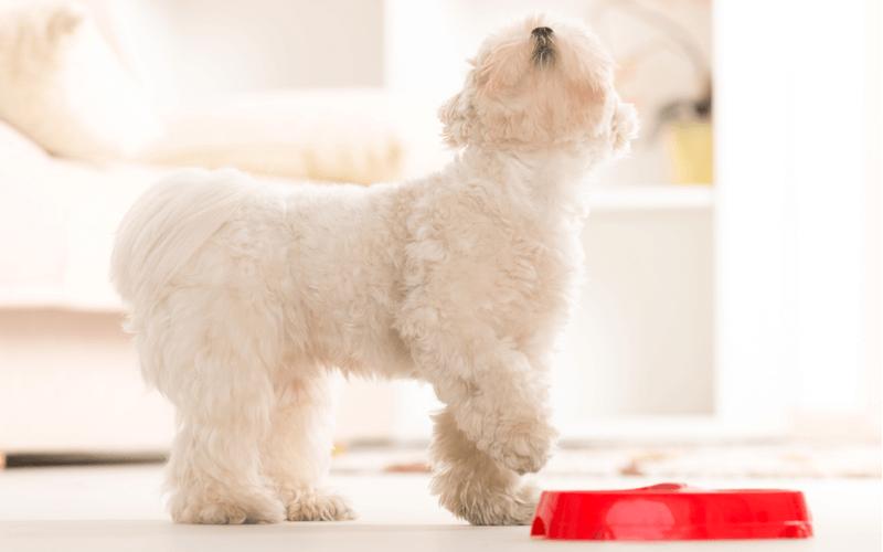 愛犬がドッグフードを食べなくなった?犬の偏食の原因を知って対策をとろう!