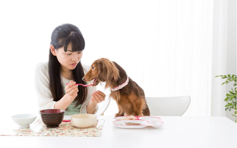 犬に白米をあげてもいい?飼い主さんが大好きな白米を愛犬に分けるのは大丈夫?与え方の注意点を知ろう