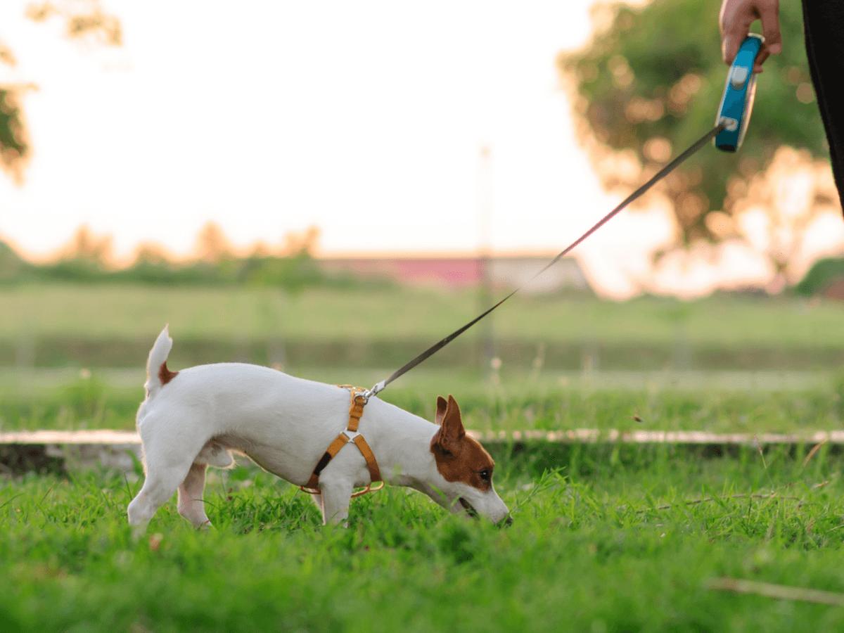 犬が拾い食いをする原因と症状は?治らないときは正しい方法でしつけをしよう