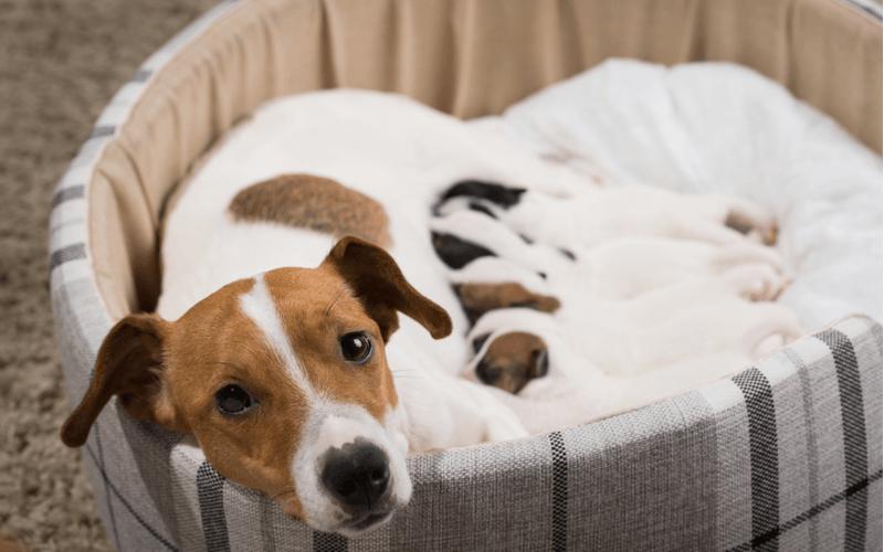 玉ねぎの誤飲・誤食に注意  少量でも犬に玉ねぎは食べさせないで!