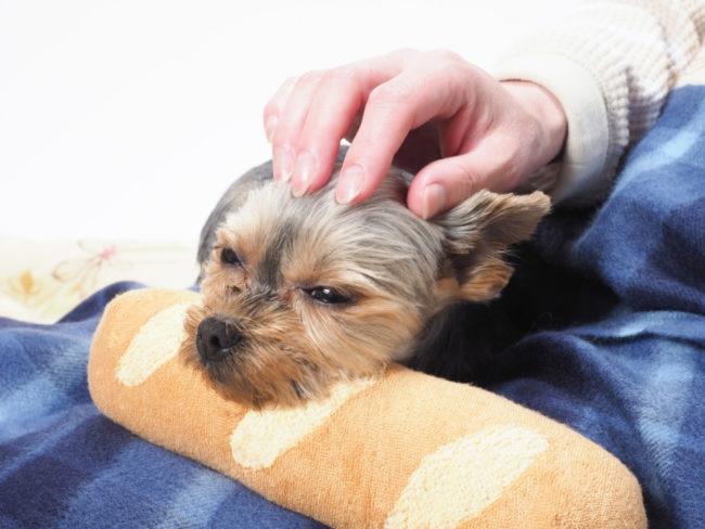 犬の便秘は何日目から?便秘改善方法や効果的な食材を紹介