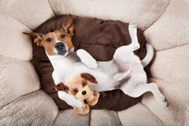 犬が咳をする原因は何?危険な病気の可能性に注意!