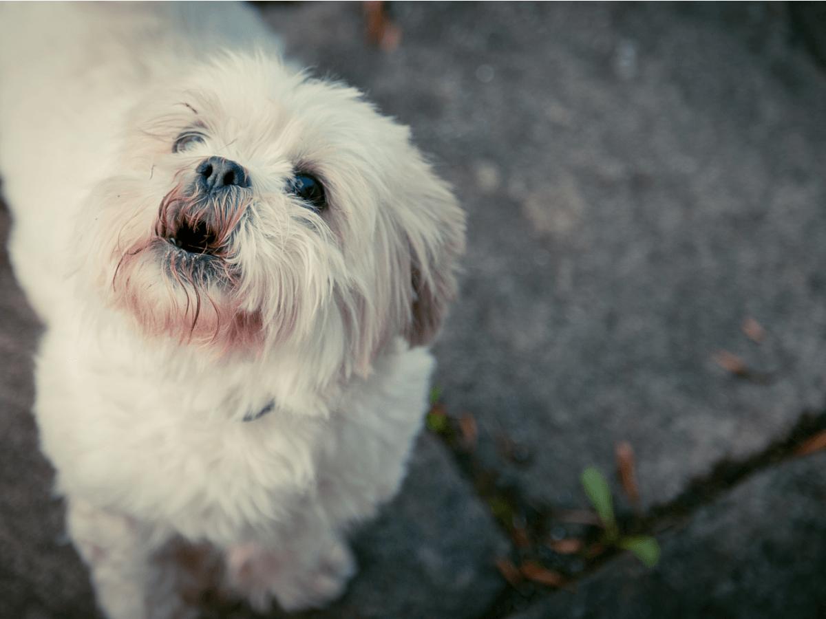 犬の夜泣きの原因と対処法を子犬・成犬・老犬ごとに解説!対策で使える防音グッズ5選も紹介