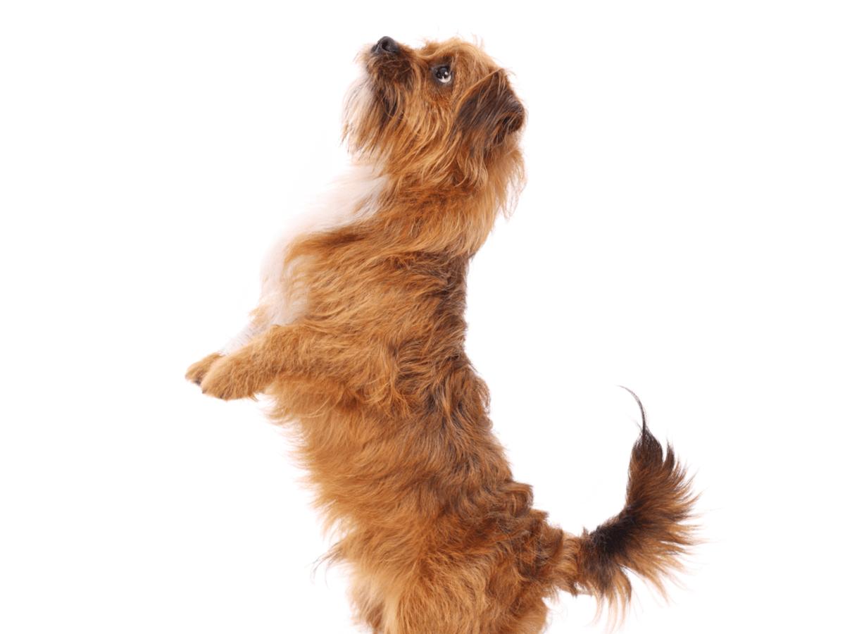 犬がマウンティングを行う5個の理由とやめさせる方法!原因を知ってきちんと対策をとろう