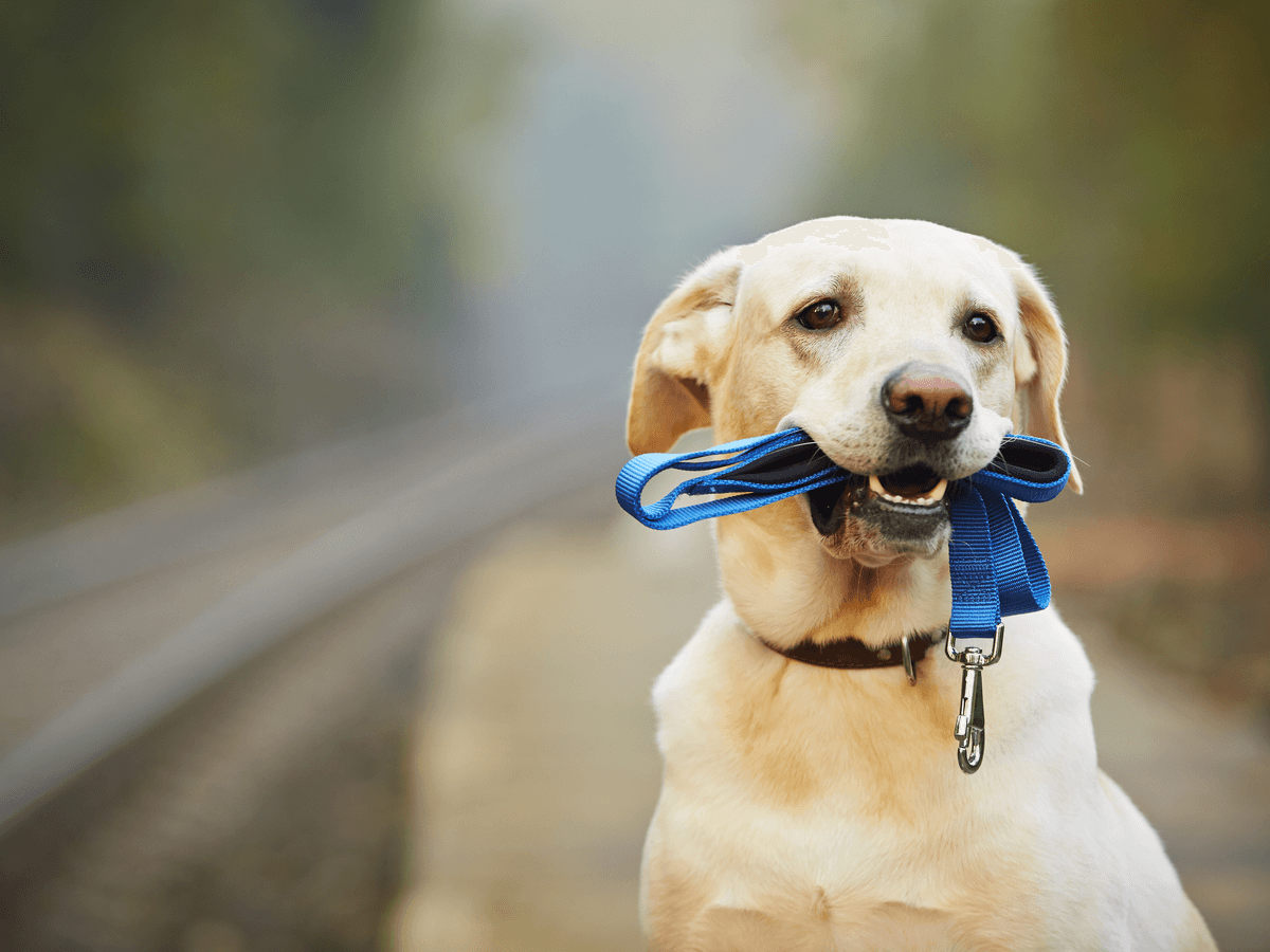 犬が散歩嫌いになった!考えられる理由5つと克服方法4つを知って楽しい散歩タイムを取り戻そう