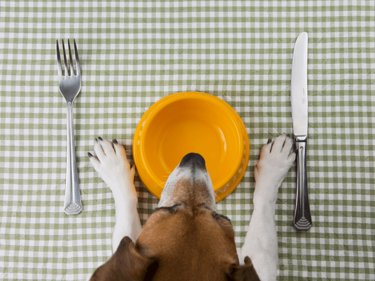 犬にレタスを食べさせても大丈夫?生・加熱で与える際の注意点と適量