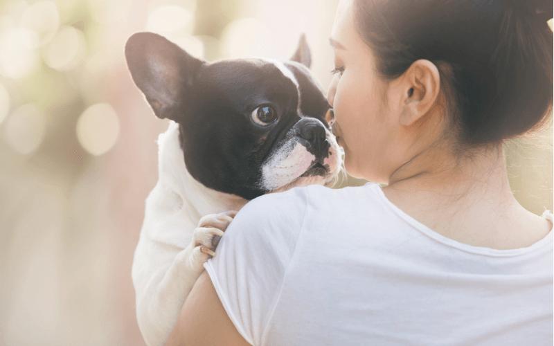 犬の多頭飼いのメリットやデメリットと注意点