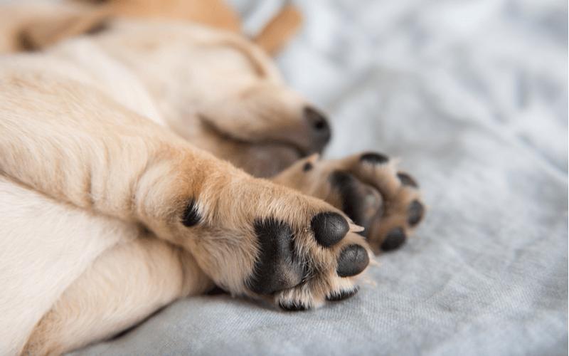 犬が散歩嫌いになったら 考えられる理由5つと克服方法4つを知って楽しい散歩タイムを取り戻そう