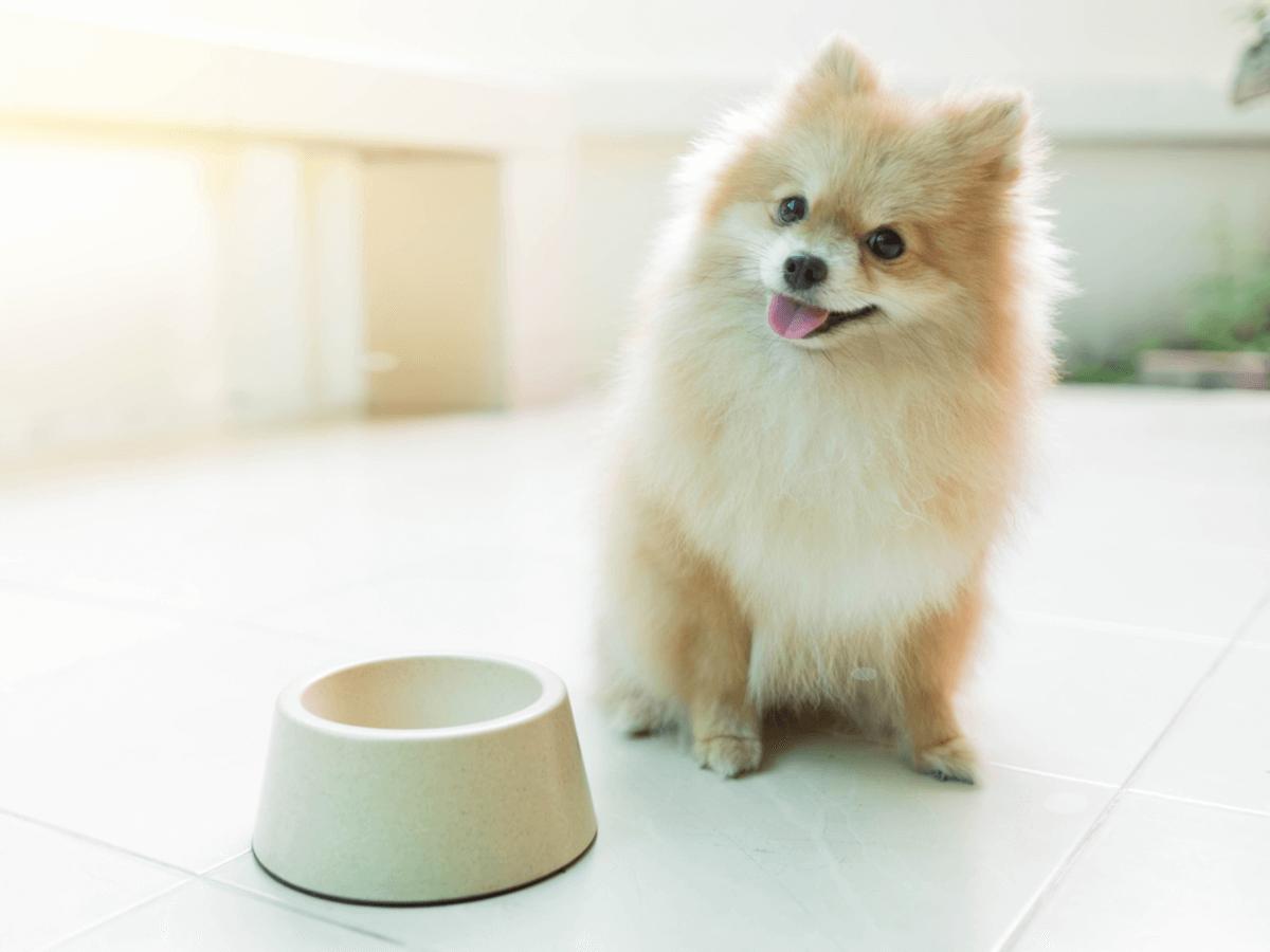 犬におからをあげても大丈夫?食べさせるメリットと注意したいこと