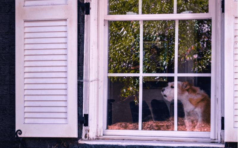 犬の夜泣きの原因と対処法