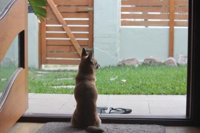 飼い主の帰りを待つ留守番中の犬の画像