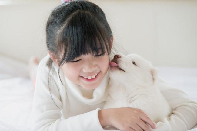 女の子の顔を舐める白い子犬の画像
