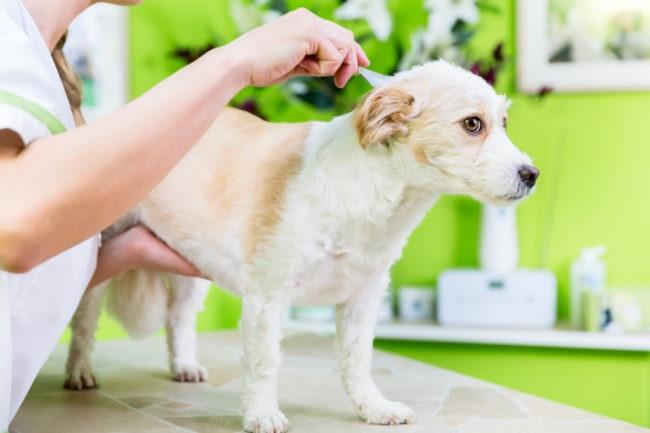 定期的な被毛のケアを行う子犬の画像