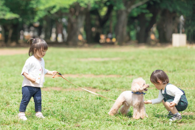 適切な距離感の犬と人間の子どもの画像