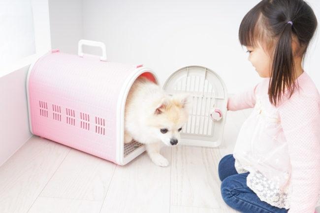 犬がなつく方法を実践する女の子の画像