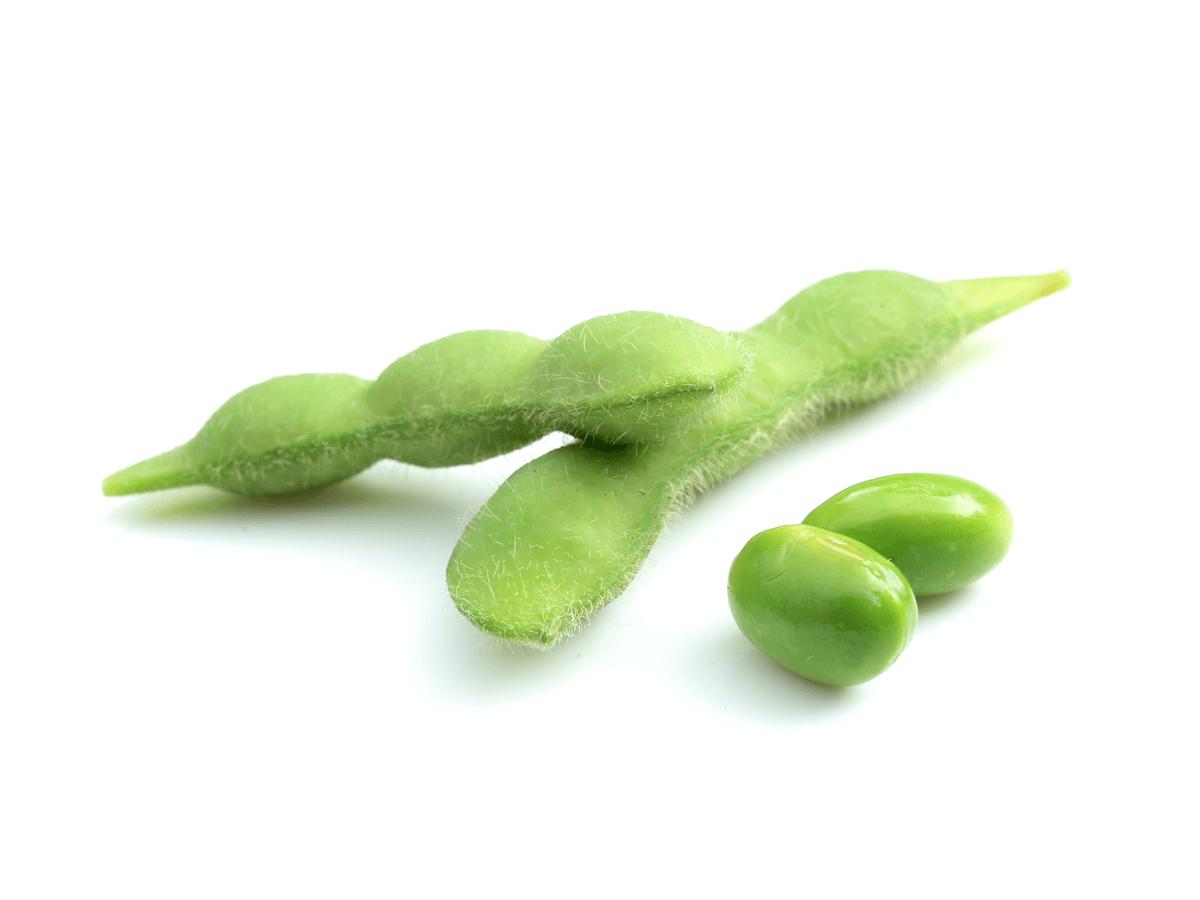 犬に枝豆を食べさせても大丈夫?食べさせるときの注意点を知れば犬の健康維持になる