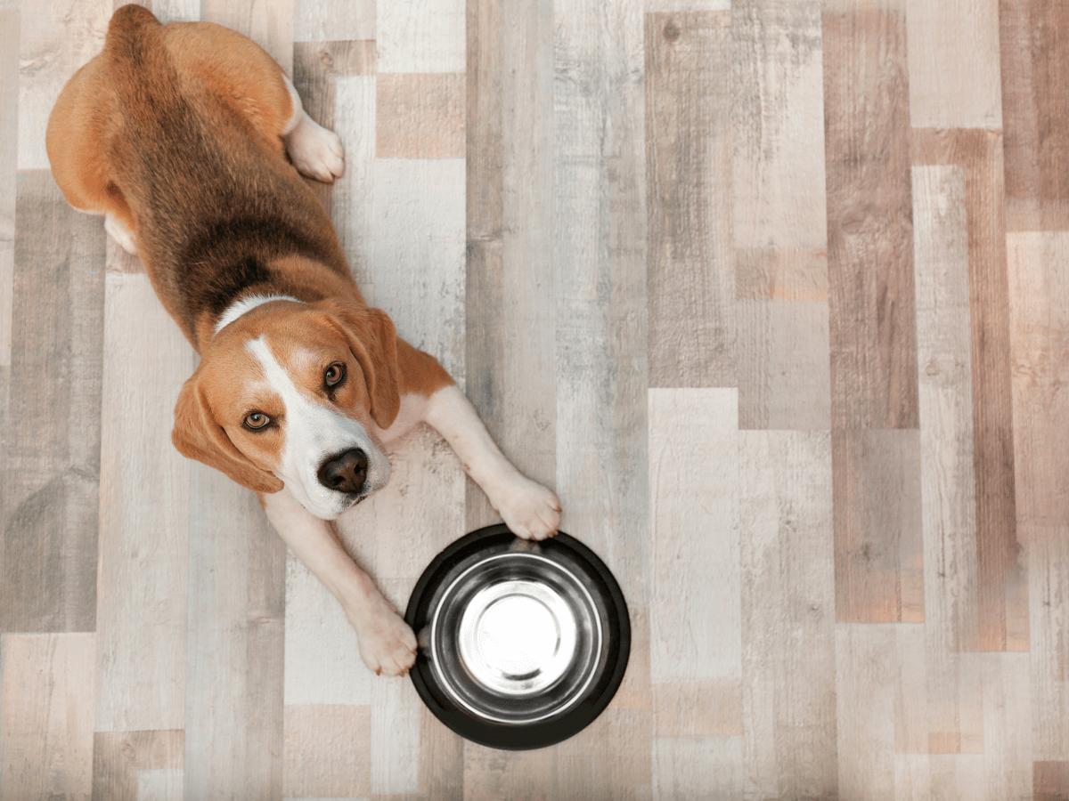 犬に小松菜を与えても大丈夫?与え方や量など注意点をご紹介