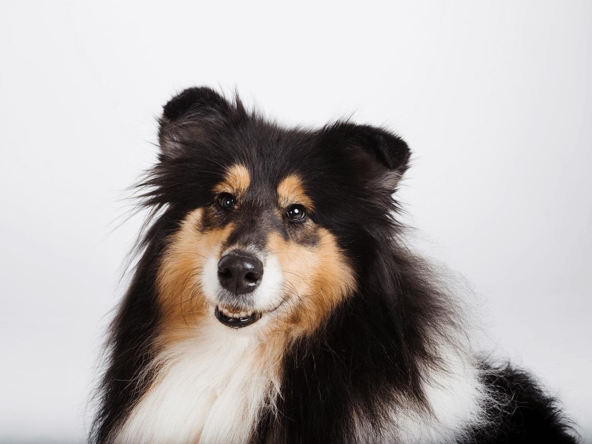 愛犬にはちみつを与えるのはダメ?ボツリヌス菌やアレルギー症状に要注意