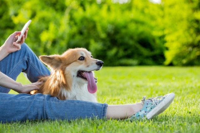 愛犬の写真を綺麗に撮れる?可愛さを引き出す撮り方