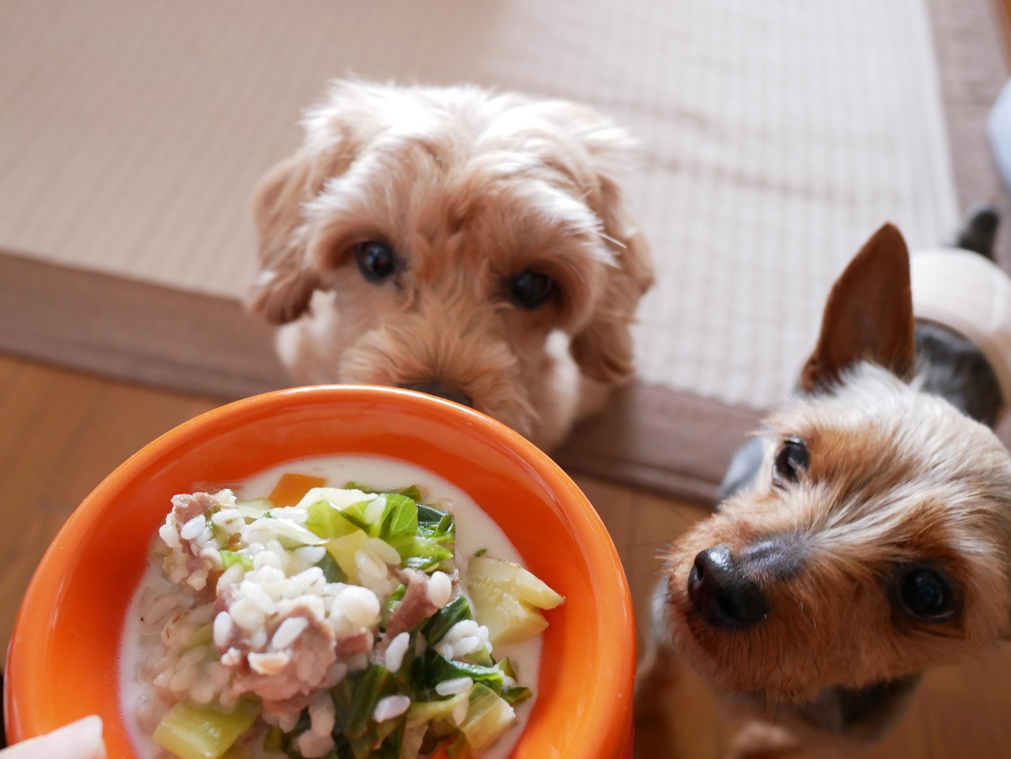 犬の餌を手作りごはんにするメリット・デメリット!おすすめレシピもご紹介