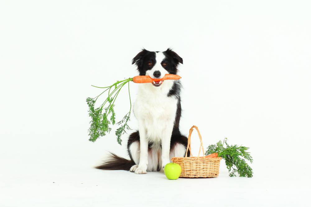 犬に絶対与えてはいけない野菜・果物は?与えていいもの&注意点徹底まとめ