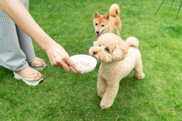 犬の餌の適切な量と回数とは?給与量の計算方法とドッグフードの選び方