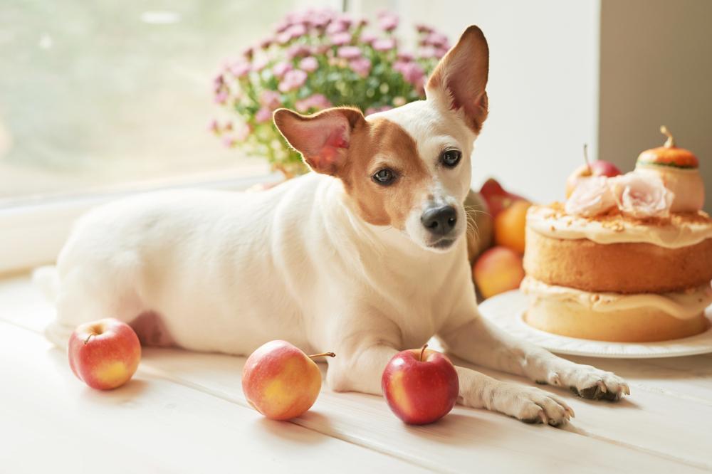 【犬のおやつ】わんちゃんに人気!手作りレシピ&おすすめおやつタイプ5選