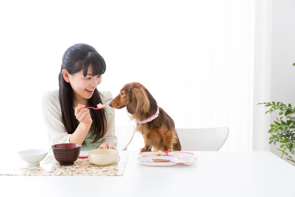 子犬の離乳食はいつからいつまで?種類や作り方・食事の量や回数をご紹介