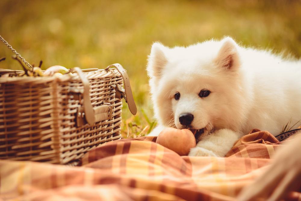 犬は桃を食べてもいいの?与える際の注意点「種」や「アレルギー」について